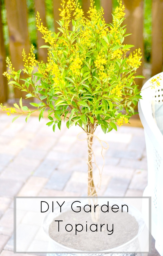 Create a DIY Garden Topiary out of a shrub from any nursery for very little money and very little time.